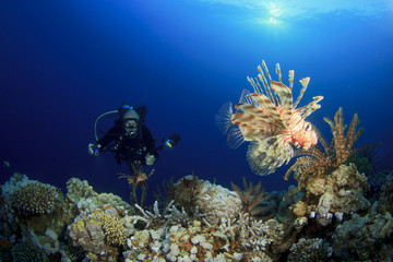 Underwater Photographer on Scuba takes photo of Lionfish