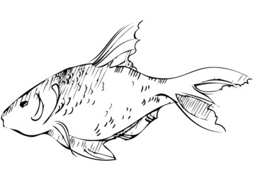 inhabitant of reservoirs of earth of large fish