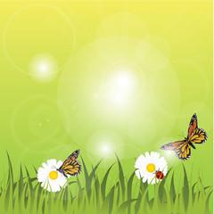 Spring grass seasonal background