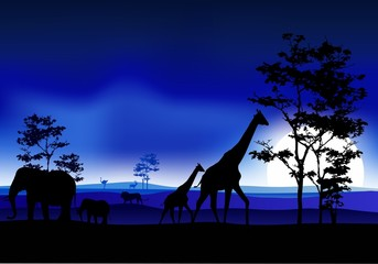 beauty silhouette of safari animal
