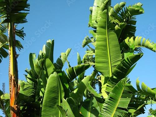 Piante tropicali palme in un giardino immagini e - Piante esotiche da giardino ...