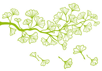 ginkgo tree branch with green leaves, vector
