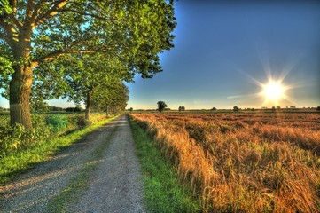 Bavarian Summer on the country