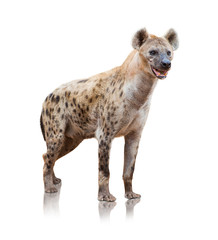 Portrait Of A Hyena