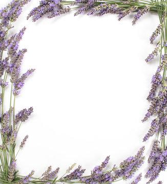 Cadre de fleurs de lavande en bordure isolé sur blanc.
