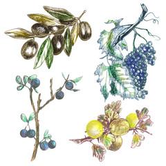 hand drawings, originals : twigs