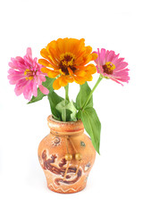 Zinnia flowers in a clay vase