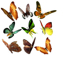 Beautiful 3D Butterflies