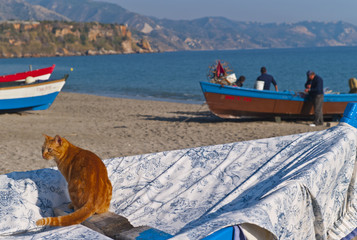 ginger cat and fishermen