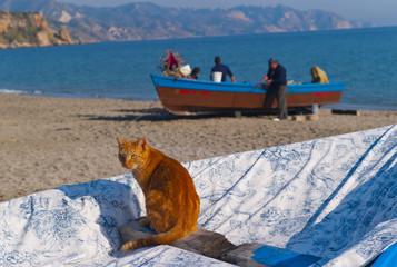 ginger cat and fishermen