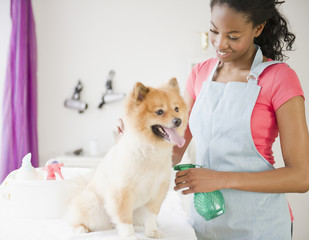 Mixed race pet groomer grooming Pomeranian dog
