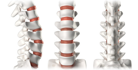 Spine anatomy lumbar region - lateral, anterior, posterior
