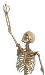 skeleton praying close up
