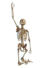 skeleton praying