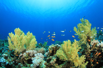 Fotobehang Koraalriffen Coral Reef Scene with Tropical Fish