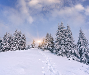 Trees covered with hoarfrost and snow in mountains