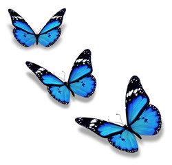 Three blue butterflies, isolated on white