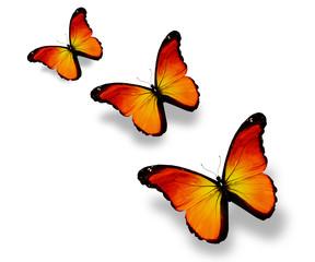 Three orange butterflies, isolated on white
