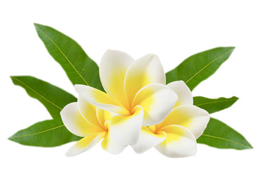 Photo Blinds Plumeria plumeria flowers