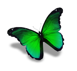 Green butterfly flying, isolated on white