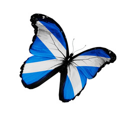 Scottish flag butterfly flying, isolated on white background
