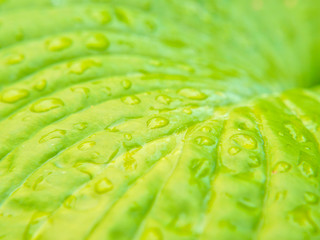 Closeup of small water drops on leaf