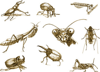 Hand-drawn collection into vectors. Beetles and insects.