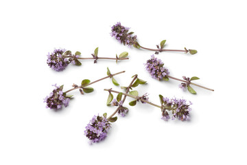 Fresh oregano thyme flowers