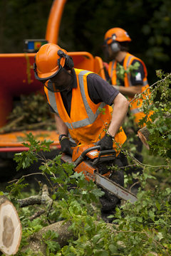 Chainsaw trimming