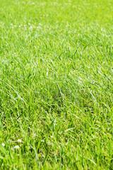 Green grass, close up