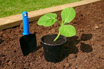 Gardening - 10