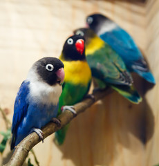 Parakeet collection