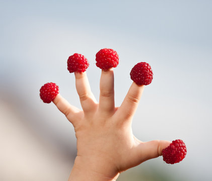 Little child's hand with raspberries
