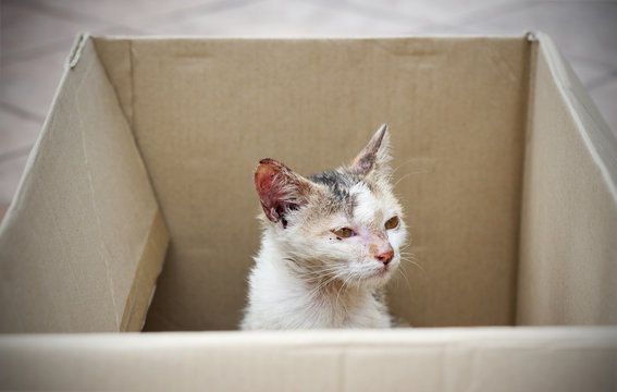 stray cat being rescued