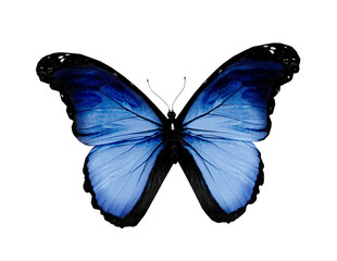 Grunge blue butterfly, isolated on white