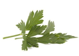 Sweet parsley leaves