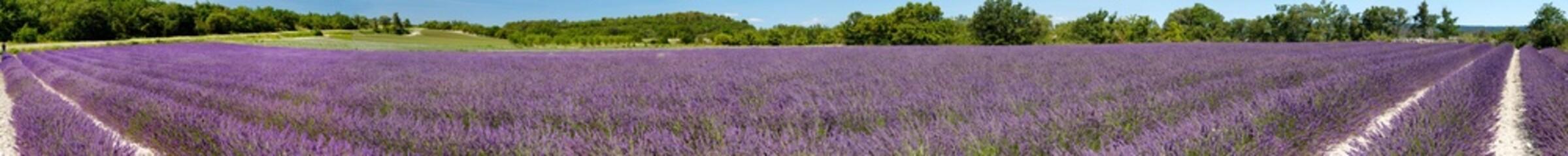 Spoed Fotobehang Lavendel Panorama d'un champ de lavande