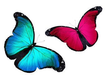 Two butterflies flying, isolated on white