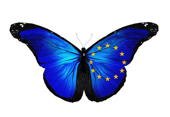 European Union flag butterfly flying, isolated on white backgrou