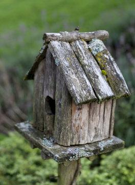 nichoir pour oiseaux au jardin