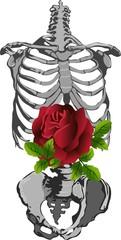 skeleton and rose