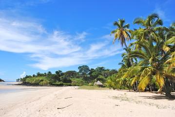 Palms on the beach - Africa - Madagascar - Andilana