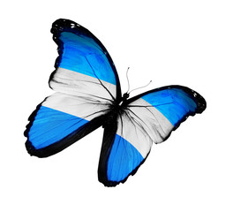 Argentine flag butterfly flying, isolated on white background
