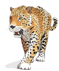 Jaguar, wild cat Panther. Vector, isolated