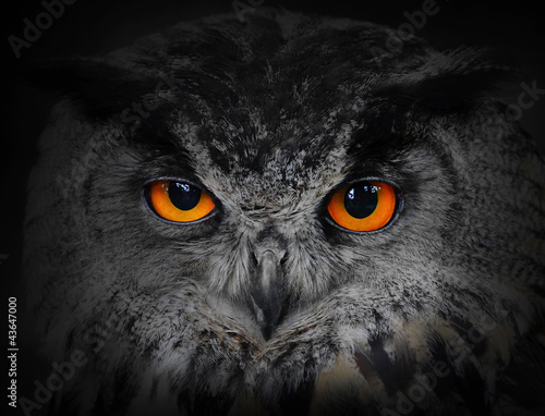 Fototapete The evil eyes. ( Eagle Owl, Bubo bubo).