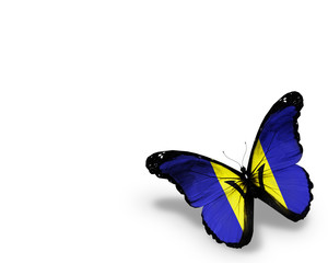 Barbados flag butterfly, isolated on white background