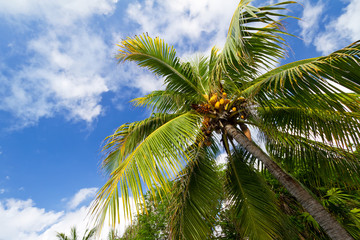 Scenery of Caribbean beach with palm trees