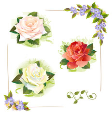 Set of roses. Vintage style. Imitation of watercolor painting.