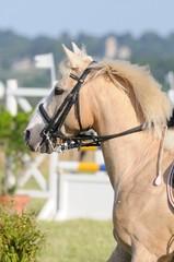 cheval crème sur l'oeil