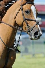 cheval et martingale